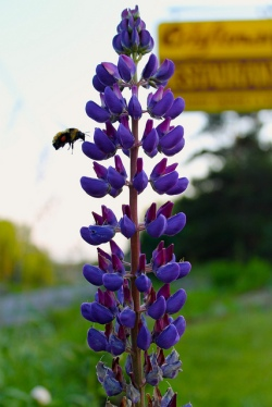 Even the bees stop by The Craftsman for a snack!